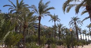 PALM GROVE OF ELCHE - SPAIN (THE)