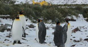 208 - BIRD ISLAND, BIRD PARADISE IN THE ANTARCTIC