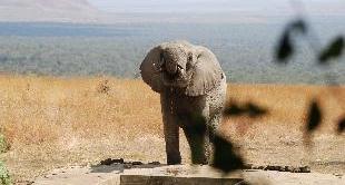 211 - KENYA, DOGS HELPING ELEPHANTS