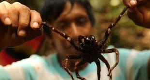 221 - VENEZUELA, MYGALE-SPIDER HUNTERS