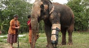 243 - THE ELEPHANT HOSPITAL OF THAILAND