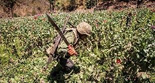 MEXICO: THE OPIUM WAR  - 20-05-2017
