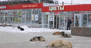 4 - WILD DOGS OF MOSCOW