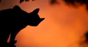 THE CAT, THE CUTEST KILLER