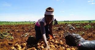 ZIMBABWE : PROMISED LANDS