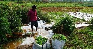 INDIA: POLLUTION, INDOLORIC EVIL - 24-02-2018