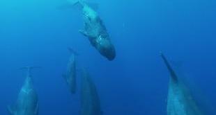 03 - +/- 5 METERS: FRAGILE OCEAN (VR)