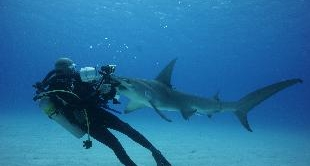 04 - DIVING WITH SHARKS