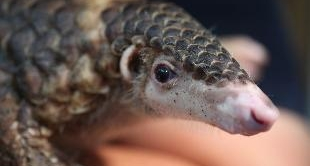 277 - SALVAGE FOR THE PANGOLIN