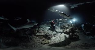 02 - 700 SHARKS: AT THE HEART OF THE PACK