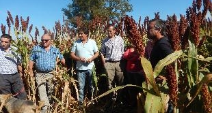 ARGENTINA: THE PIONEERS OF A POST-GLYPHOSATE WORLD 06-02-2018