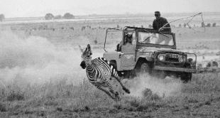WILD AFRICA ON FILM