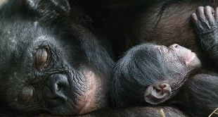 02 - MOTHER OF THE BONOBOS