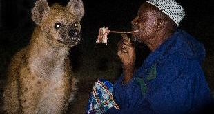 HYENAS OF HARAR (THE)
