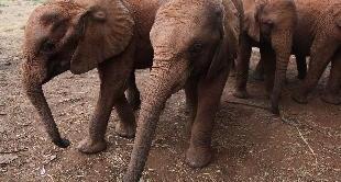 23 - THE ELEPHANTS OF MOUNT KENYA