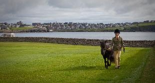 25 - HANNAH AND THE SHETLAND PONIES