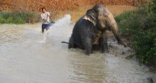 32 - AN ELEPHANT ON A LONG JOURNEY